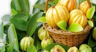 Pure Garcinia Cambogia Extract Reviews : Usage & Side Effects